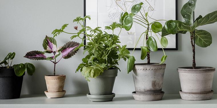 populära växter 2019